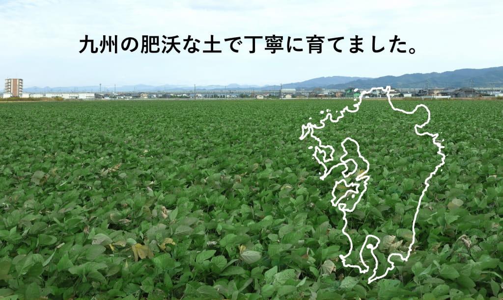 九州の肥沃な土で丁寧に育てました。