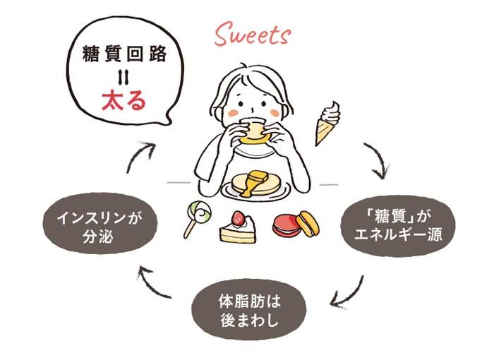 太りやすい「糖質回路」