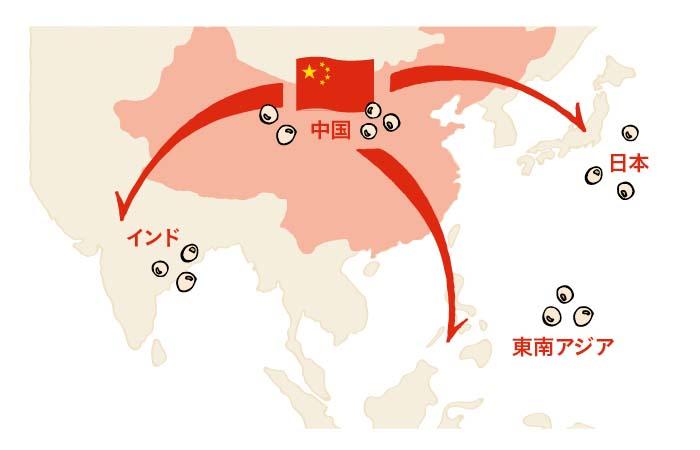 大豆は中国から各地へ伝わったと言われています