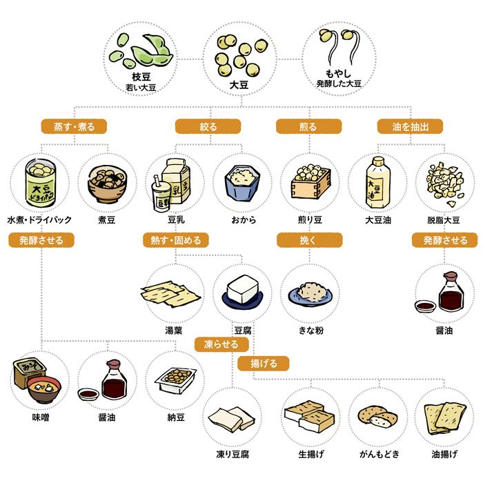 大豆はさまざまな食品に加工されます