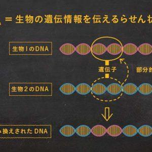 遺伝子組み換えの仕組み図